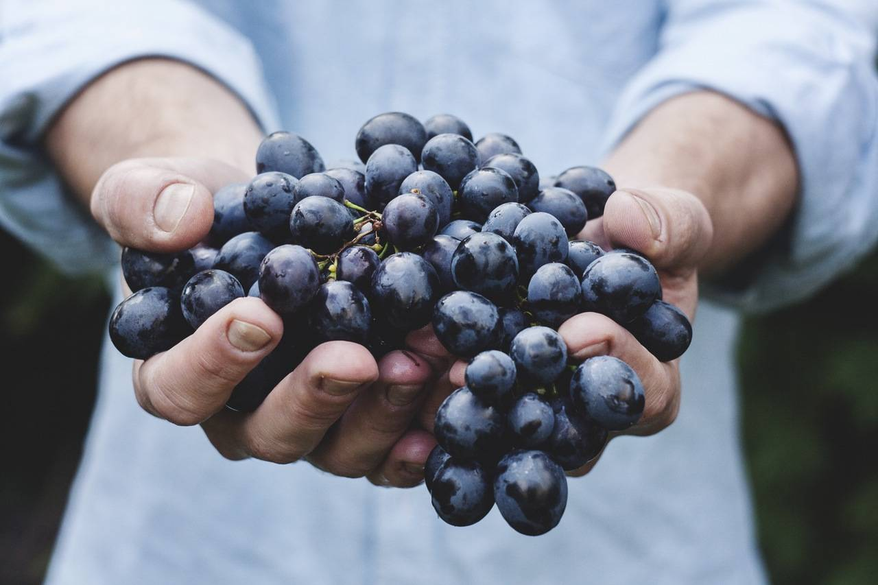 zdrowa żywność - biożywność